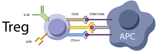 Key reagents for Treg cells
